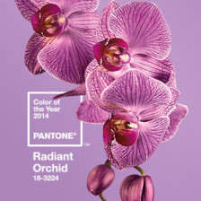 Radiant Orchid fashion food home