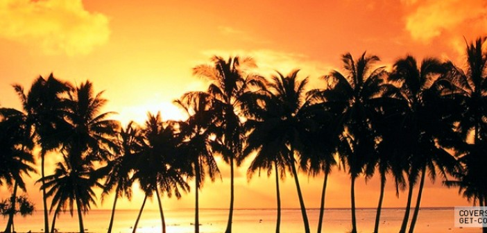 palm trees summer
