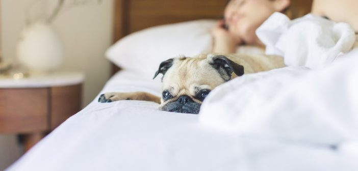 Sleeping Beauty – 8 Benefits of a Good Night's Sleep